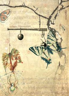 Equilibrium by Florin Mihai