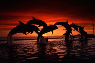 Dolphins by Eduardo Palma