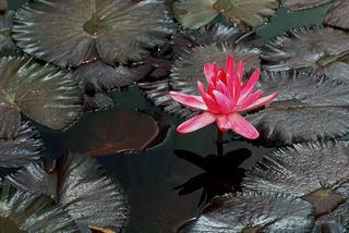 Lilac by Gustavo Gatto