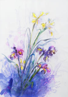 Iris by Margarita de Grassa