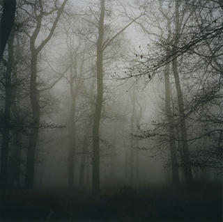Landscape - Commonhill Wood No5 by Robert Davies