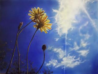 To the Light by Rosario de Mattos
