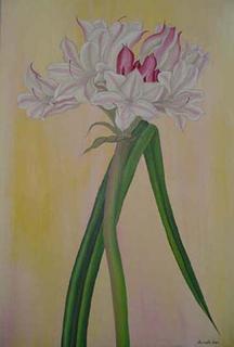 Crinum Bulbspermum by Marinella Owens