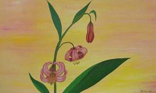 Lilium Martagon by Marinella Owens