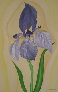 Iris Sibirica by Marinella Owens