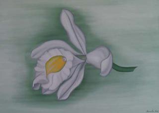 Trichopilia by Marinella Owens