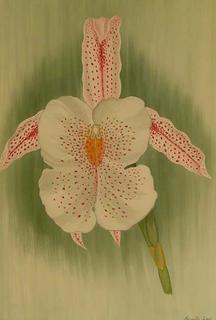 Trichopilia Gouldii by Marinella Owens