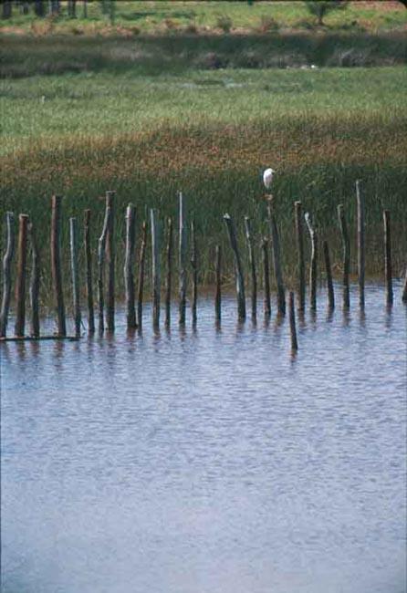 Bird on Sticks by Jorge Polo