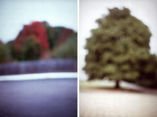 Parking Lot with White Line, Tree (Diptych) by David Armstrong