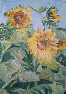 Sunflowers in the Field by Moti Lorber