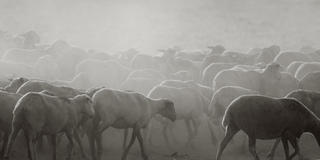 Daybreak with Sheeps 1 by Jaume Capella