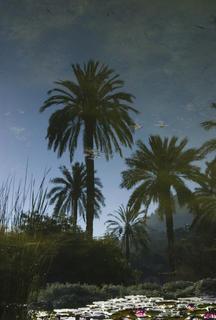 Botanical Garden 1 by Jaume Capella