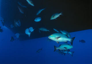 Fish under the Taka by Jaume Capella