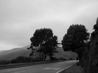 Windswept by Jack Dzamba