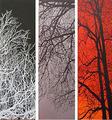 Contrasts II - Triptych by Caliz Pallarés