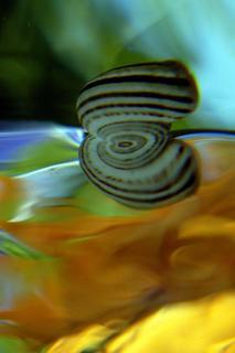 Microkosmos-Art Series:  Espiralis by Verónica Heusch