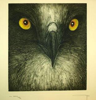 Bird of Prey by Alfonso Ayuso
