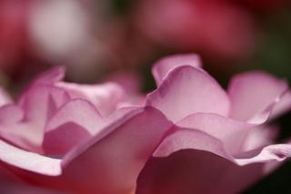 Petals and Mist by Jose Antonio Redondo Pino